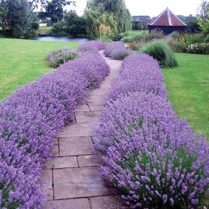 Lavander Hidcote Wise Home Building